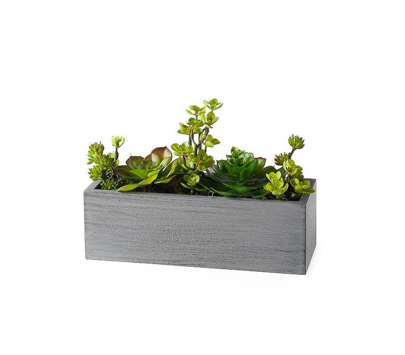 "Rectangle 10"" Potted Faux Succulent"