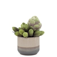 Palma Glaze Ceramic Pot Planter  5.5""