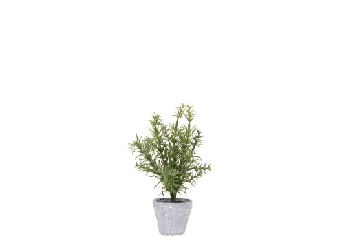 """Provence Rustic Potted Rosemary Herb Plant 10""""H"""