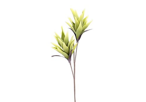 Desert Tropic 2 Bloom Paradise  Stem Green 44""
