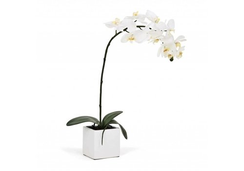 "Orchid White LG 28""h"