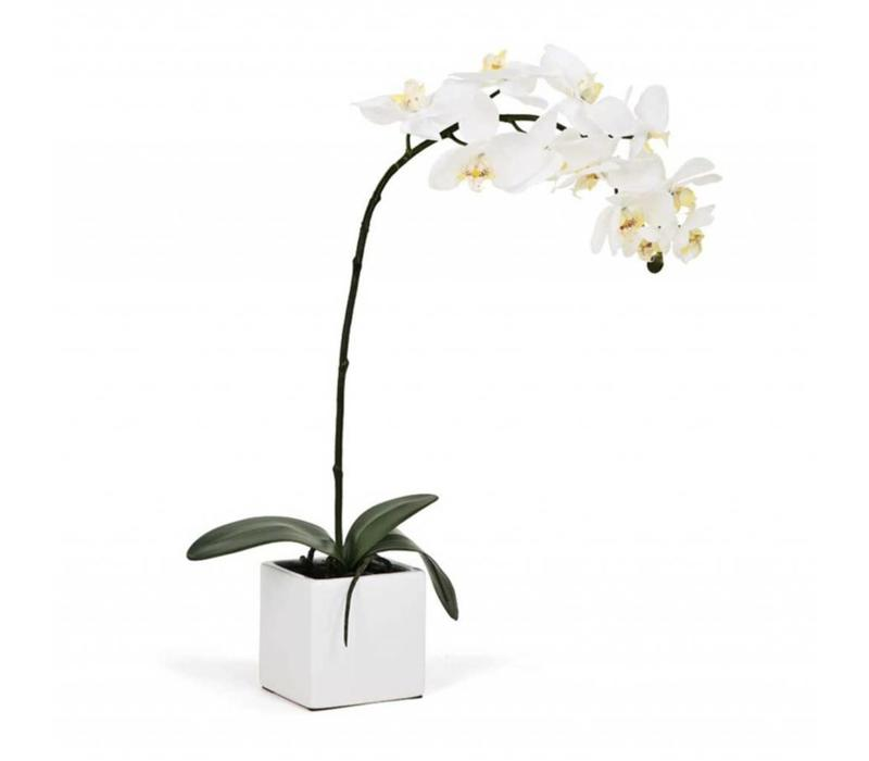 """Orchid White LG 28""""h"""