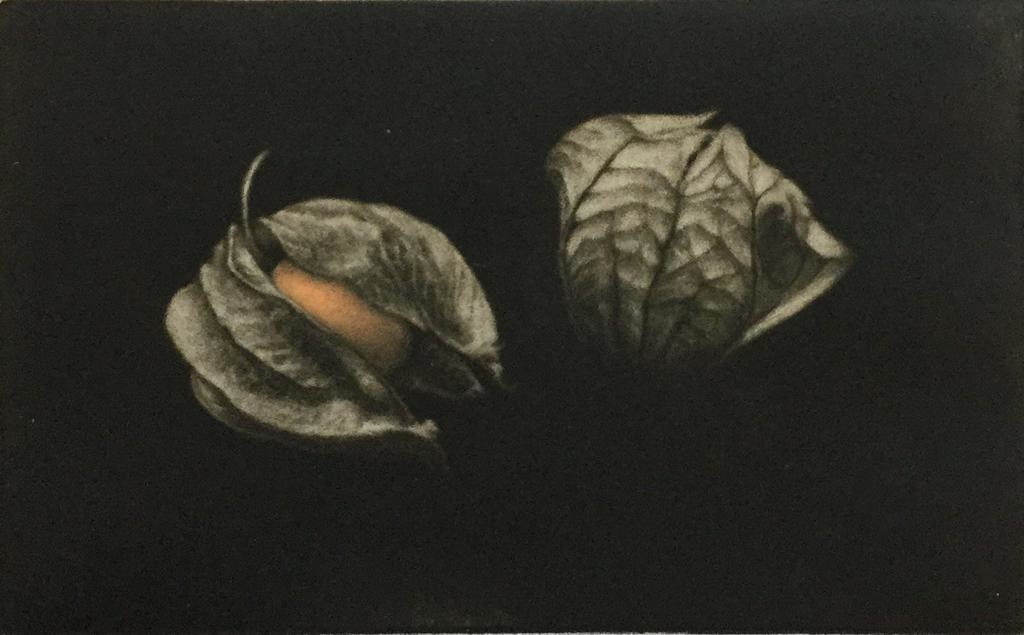Howorth, E.J. Ground cherries