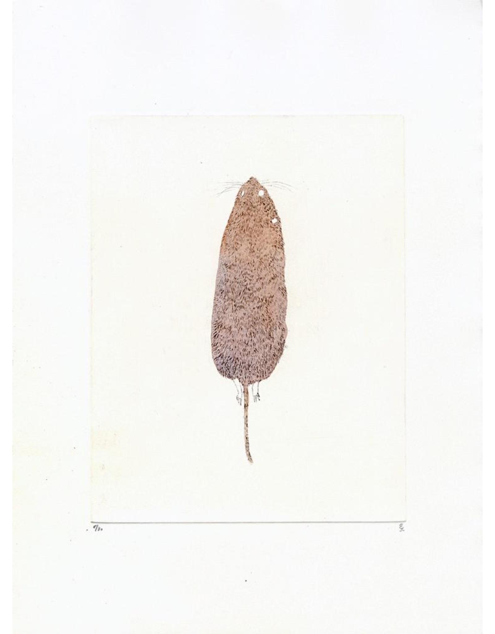 Josephson-Laidlaw, Erin Meadow Vole (from Some Specimens series)