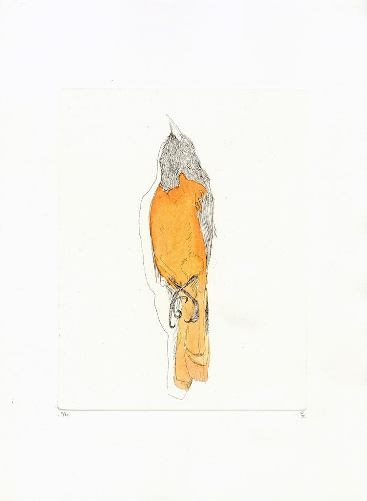 Josephson-Laidlaw, Erin Orange Bird (from Some Specimens series)