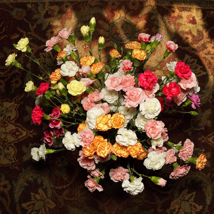 Glawson, Larry untitled (carnations overhead), homebodies series