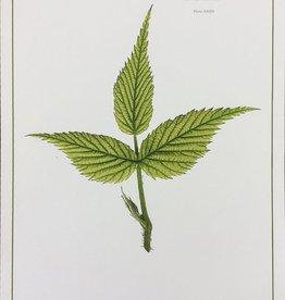 Holden, Richard No. 61 Leaf