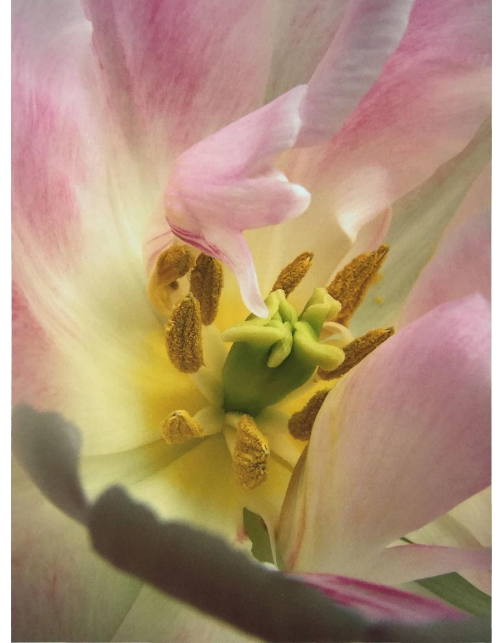 Reichert, Don untitled (flower)