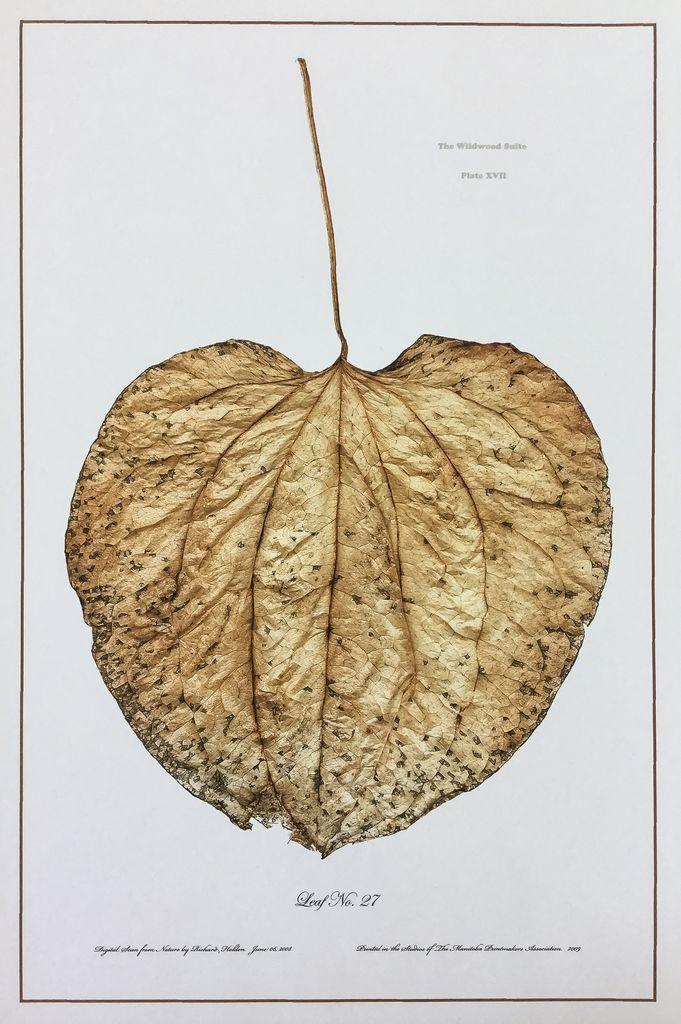 Holden, Richard No. 27 Leaf