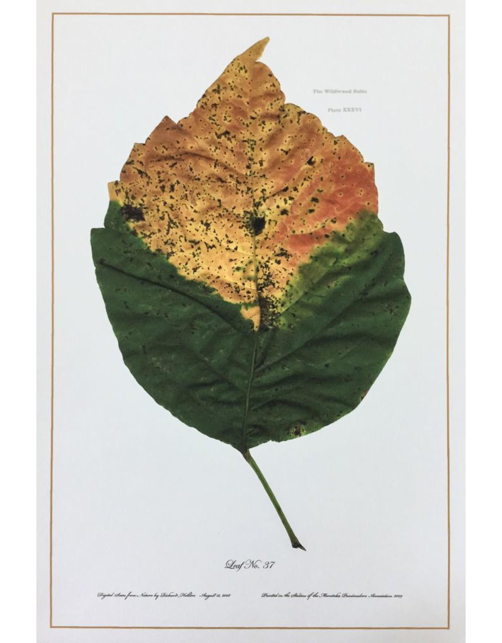 Holden, Richard No. 37 Leaf