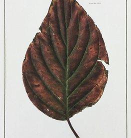 Holden, Richard No. 68 Leaf