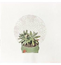 Josephson-Laidlaw, Erin Succulents