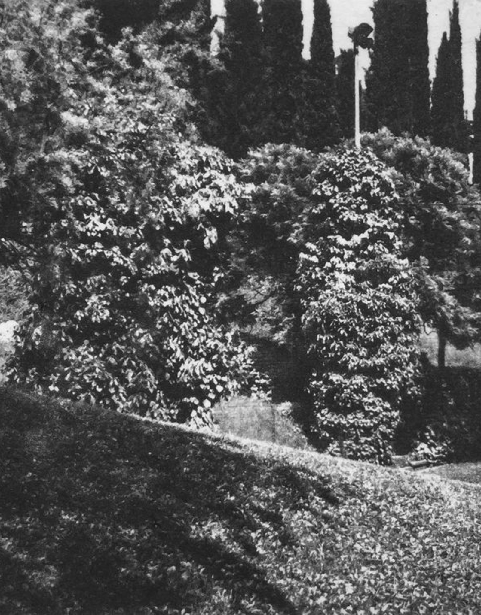 McLachlan, Ted Villa Ravero - Garden / Tennis Court