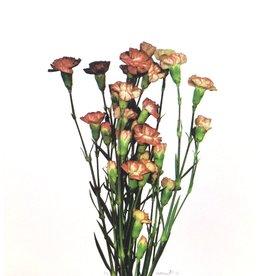 Smith, Suzie untitled (flower)