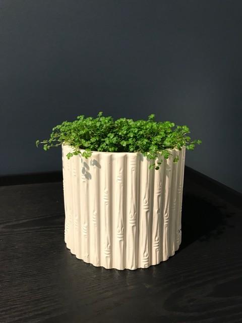 B.M.V.A. Vintage White Bamboo Ceramic Planter - H12xD14cm - Italy (Planter Only)