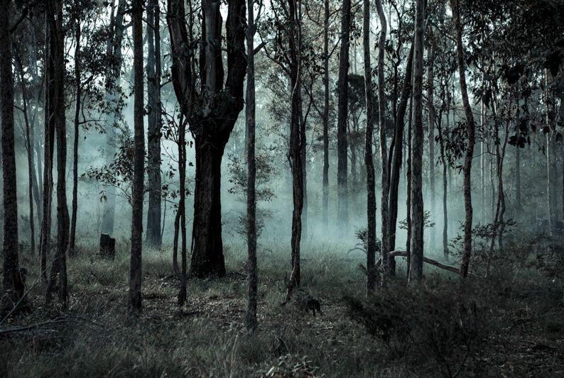 Felix Forest Photograph - Underwood, 2013