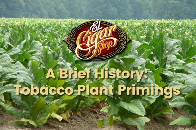Tobacco Plant Primings
