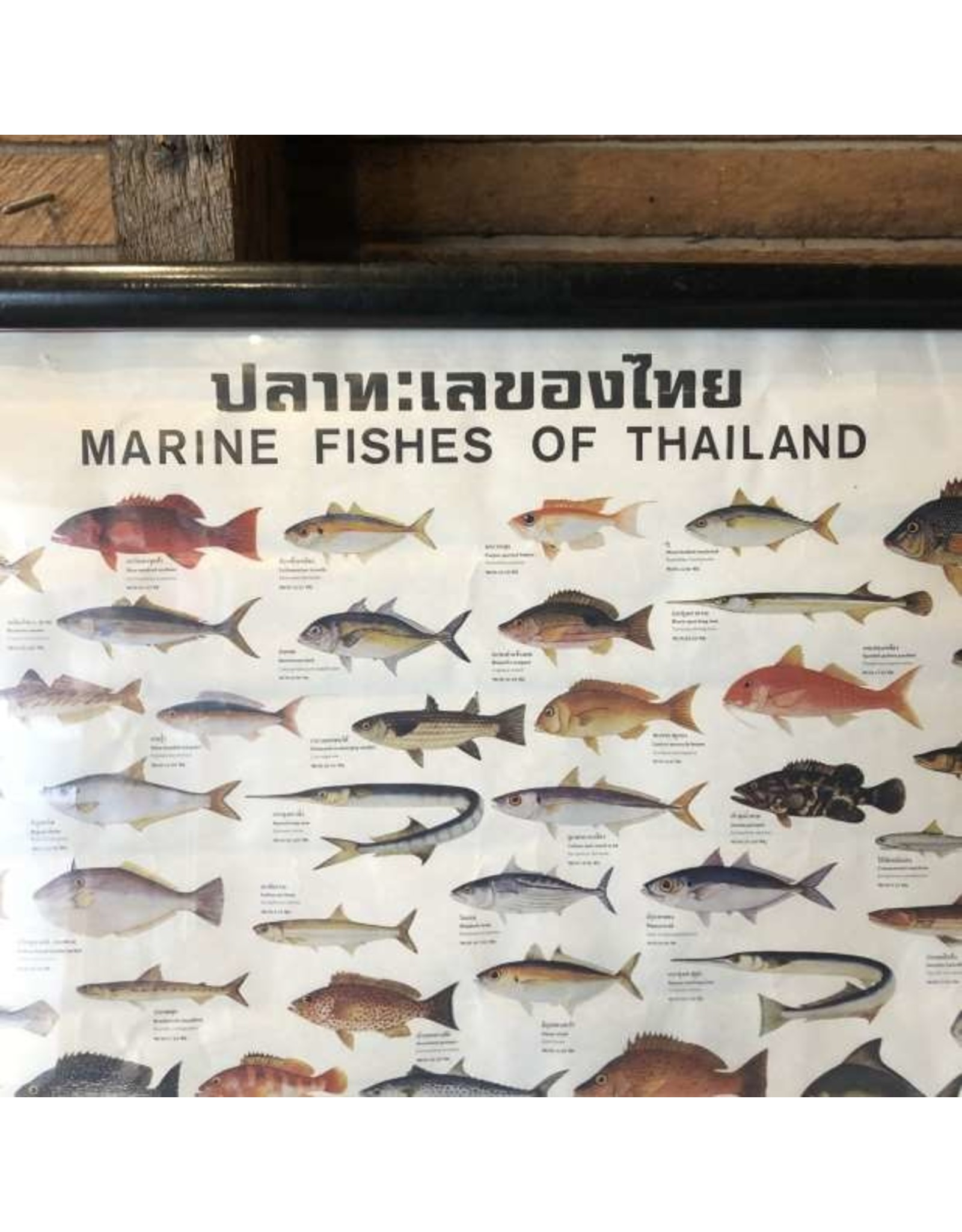 Art poster - Fishes of Thailand, framed
