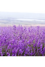 Pre de Provence Pre de Provence 150G Soap Lavender