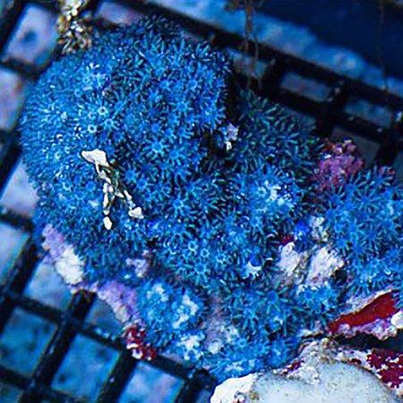 TMA Blue Sympodium