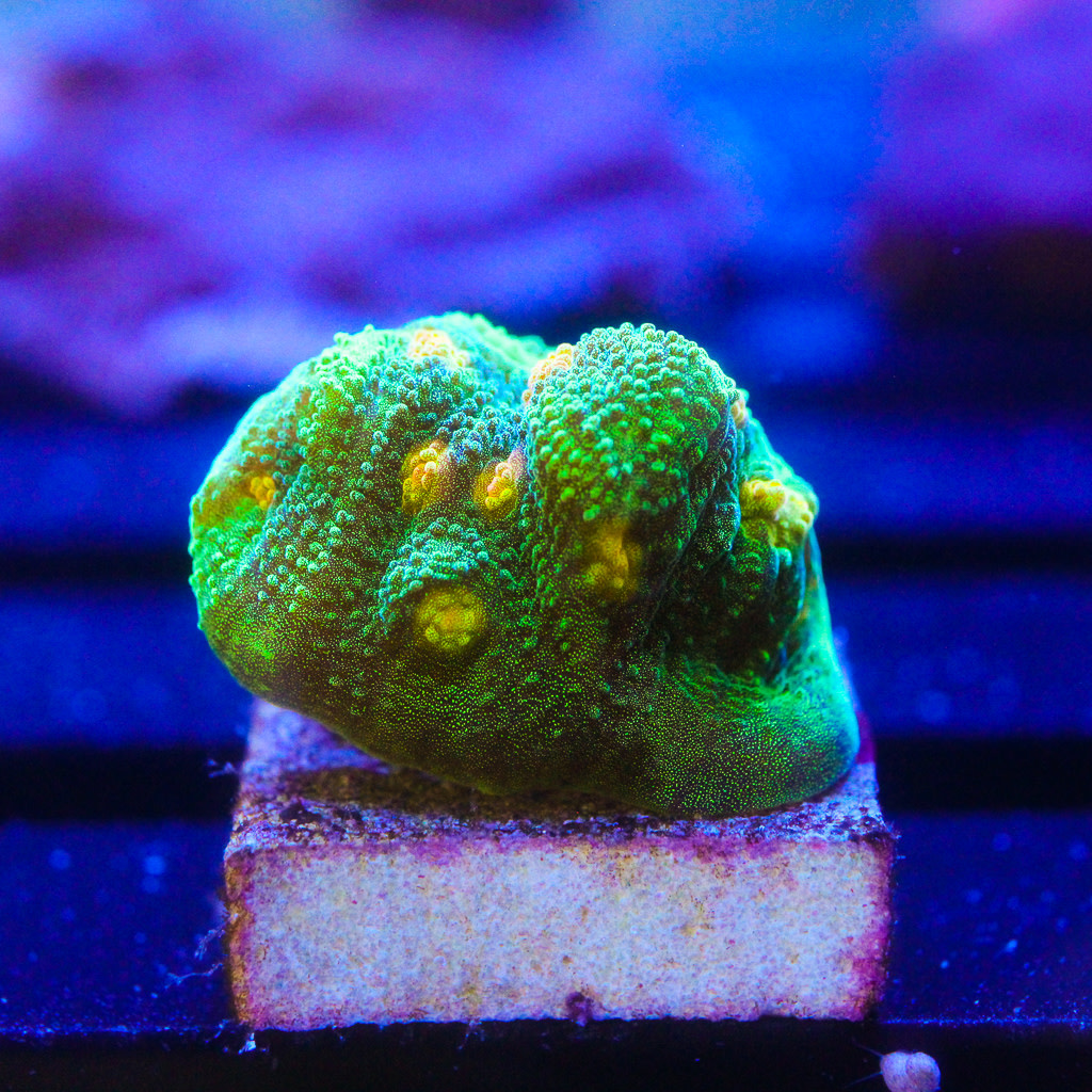 TMA Space Invaders Chalice Frag