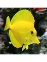 Tang - Yellow