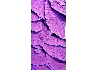 Coral & Anenome