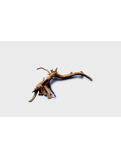"Tideline Spider Wood - Small (10""- 15"")"