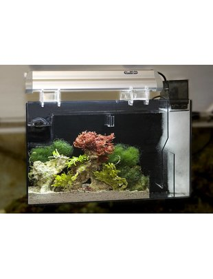 "CPR AquaFuge 2 PS Refugium w/Protein Skimmer-No Light (Small, 19.25"") CPR"