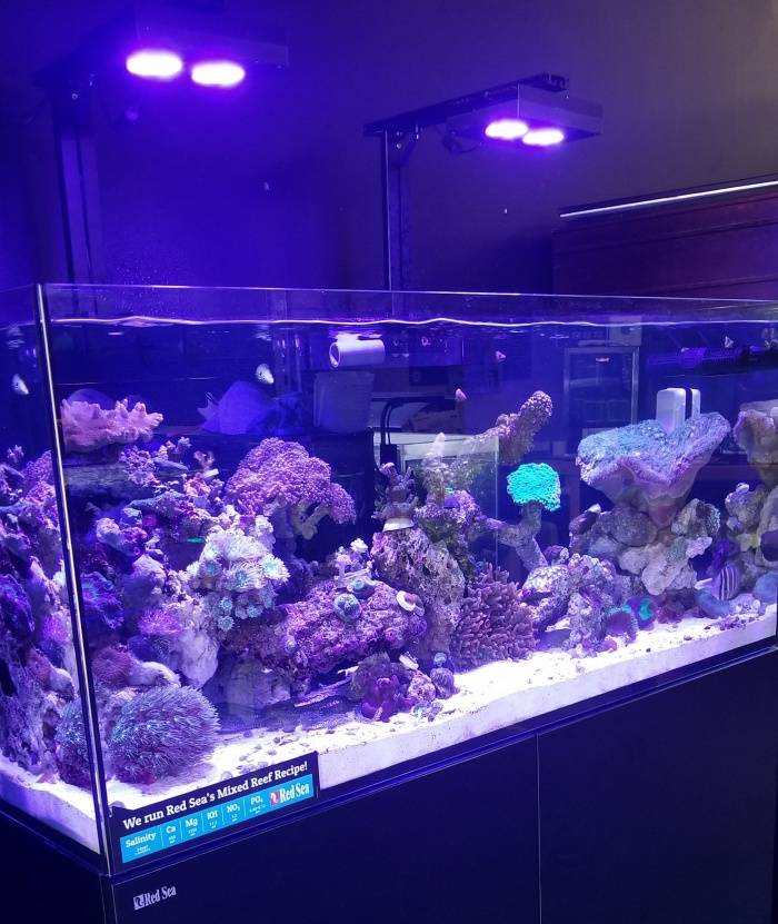 What Filtration do I need for my SaltWater Aquarium? - Glass