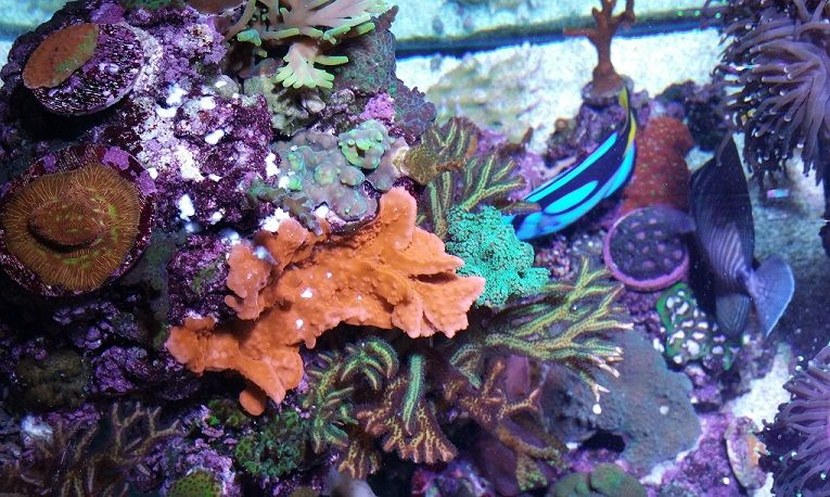 Easiest way to more colorful, faster growing and healthier corals!