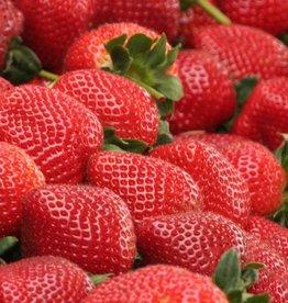 Canada Ejuice Fresh Strawberry