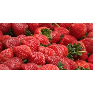 Canada Ejuice Fresh Strawberry