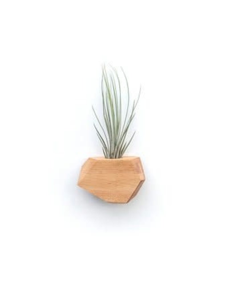 Untitled Co. Untitled Co. Geometric Wood Air Planter