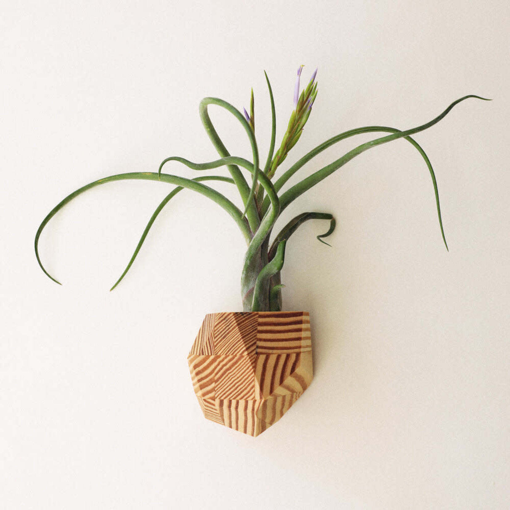 Untitled Co. Untitled Co. Geometric Wood Air Planter - More Options Available