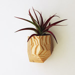 Untitled Co. Untitled Co. Georgia Air Plant Holder Jasper