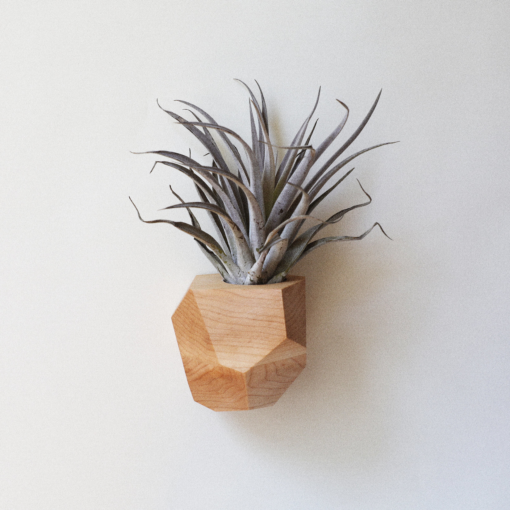 Untitled Co. Untitled Co. Georgia Air Plant Holder Maple