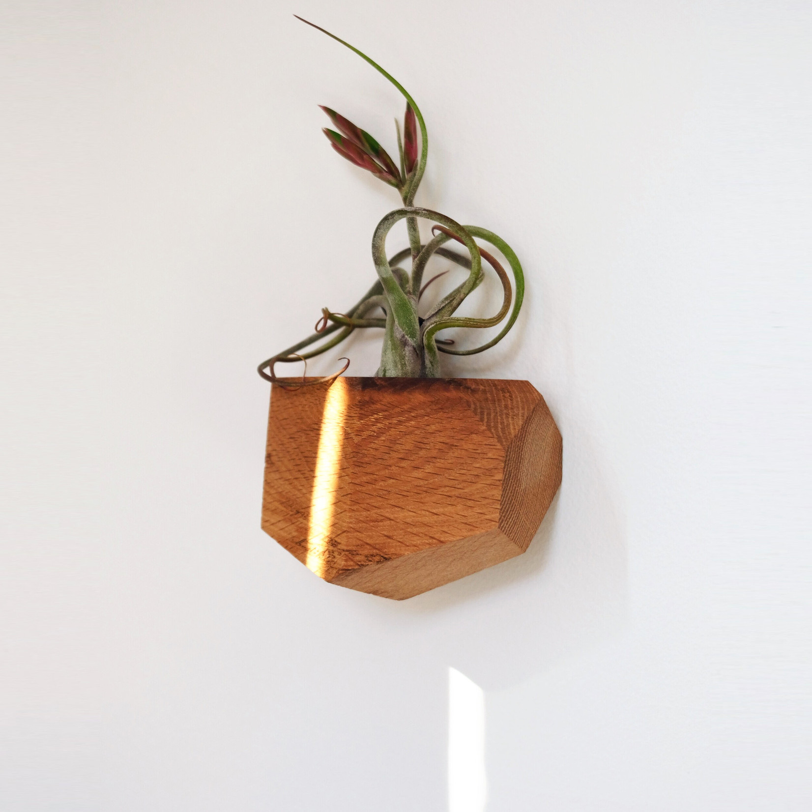 Untitled Co. Untitled Co. Georgia Air Plant Holder Red Oak