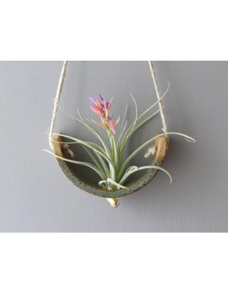 Mudpuppy Mudpuppy Hanging Air Planter - More Options Available