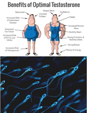 sperm-count-and-testosterone