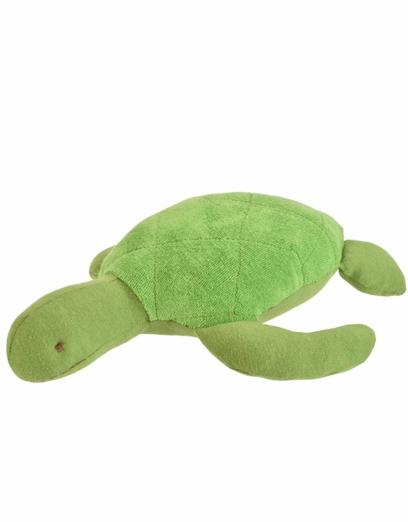 Sal the Sea Turtle