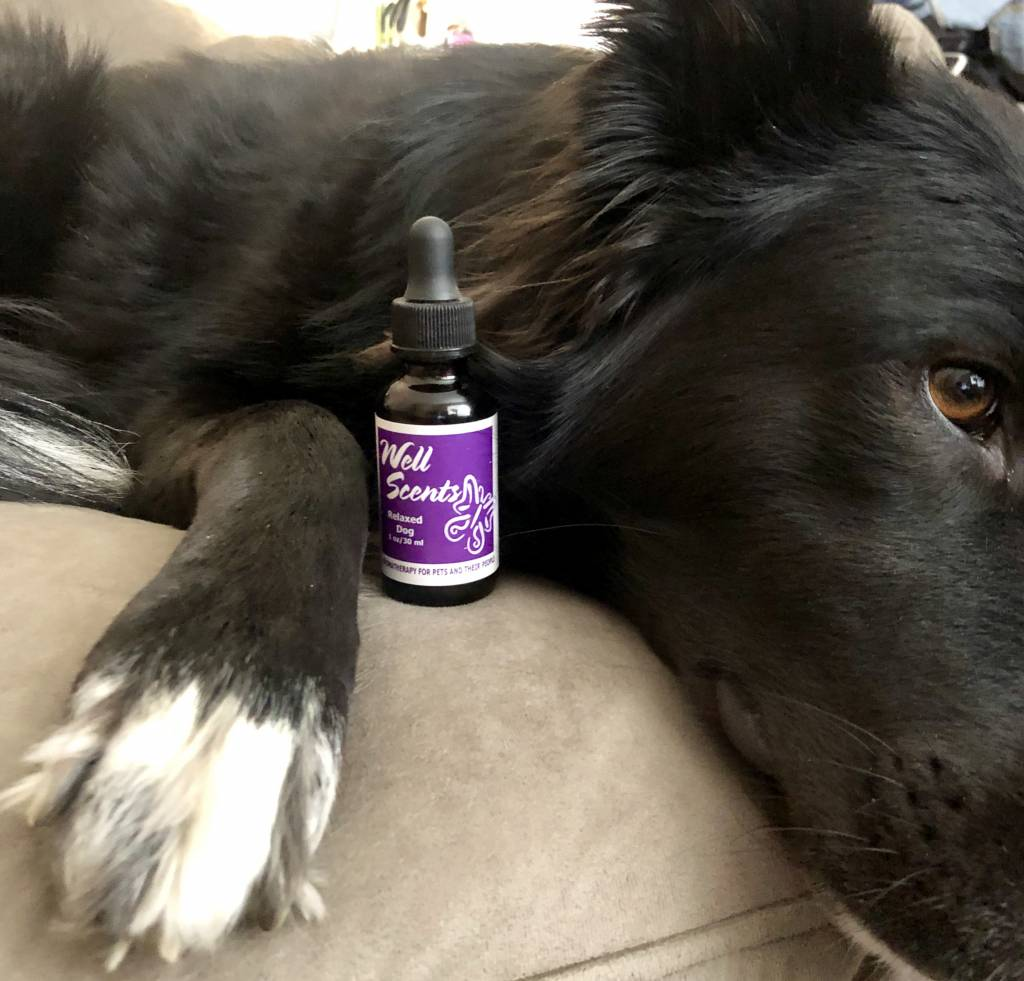 Well Scents Well Scents Relaxed Dog- Essential Oil Blend for Dogs