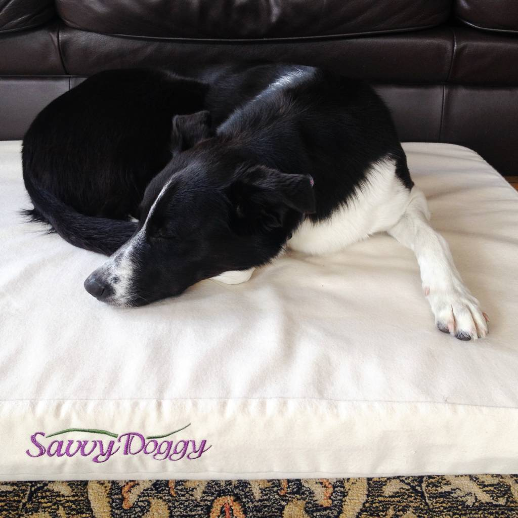 Savvy Dog Bed