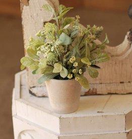 Fleurish Home Mixed Lamb's Ear in Pot