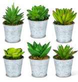Fleurish Home Succulent in Galvanized Pail (choice of 6 styles)