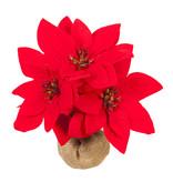 Fleurish Home Mini Poinsettia in Burlap