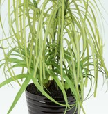 Fleurish Home Faux Mixed Grass Plant in Black Ribbed Pot