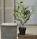 "Fleurish Home Potted Olive Bush 19"" *last chance"