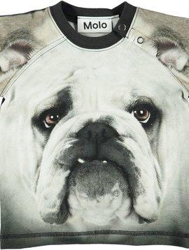 molo Egon Top - Bulldog - Molo Baby Boy
