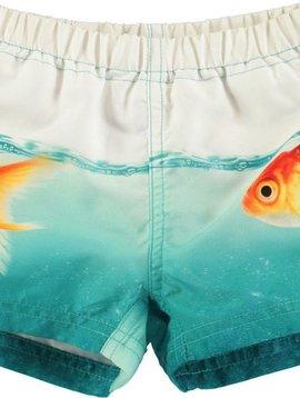 molo Newton - Scary Fish